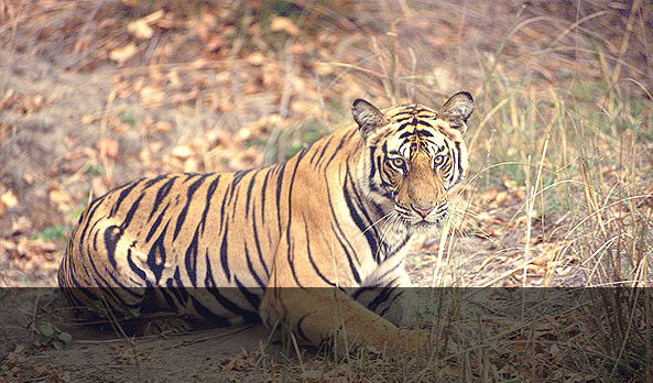 <strong >Tiger Show</strong><br><small> Prices reduced by 30% on Booking made before 15 Nov 2014</small>